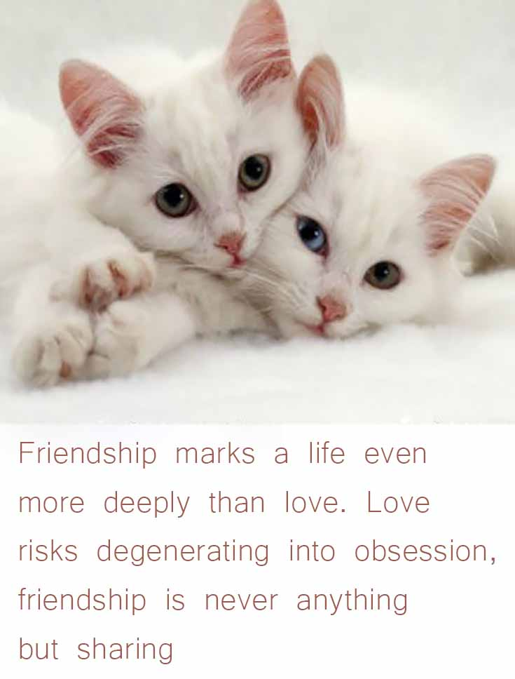 10 Inspiring Friendship Love Quotes For Your Best Friend