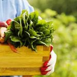 4 Ways To Buy Organic Food On A Budget - Slimming Tips Blog