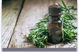 How to Use Tea Tree Oil to Get Rid of Head Lice | Head Lice Treatment Oil